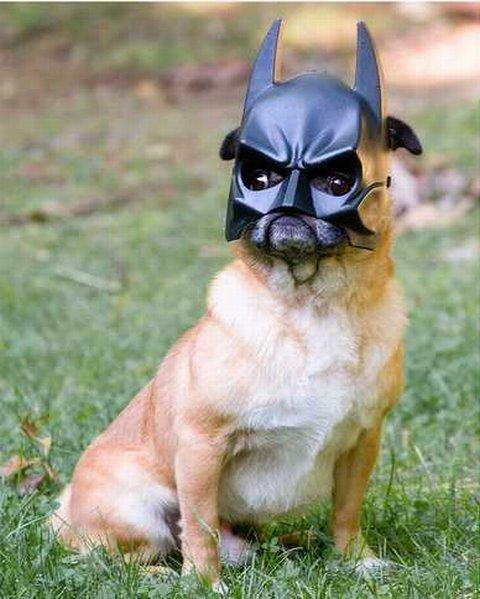 dog-cosplay